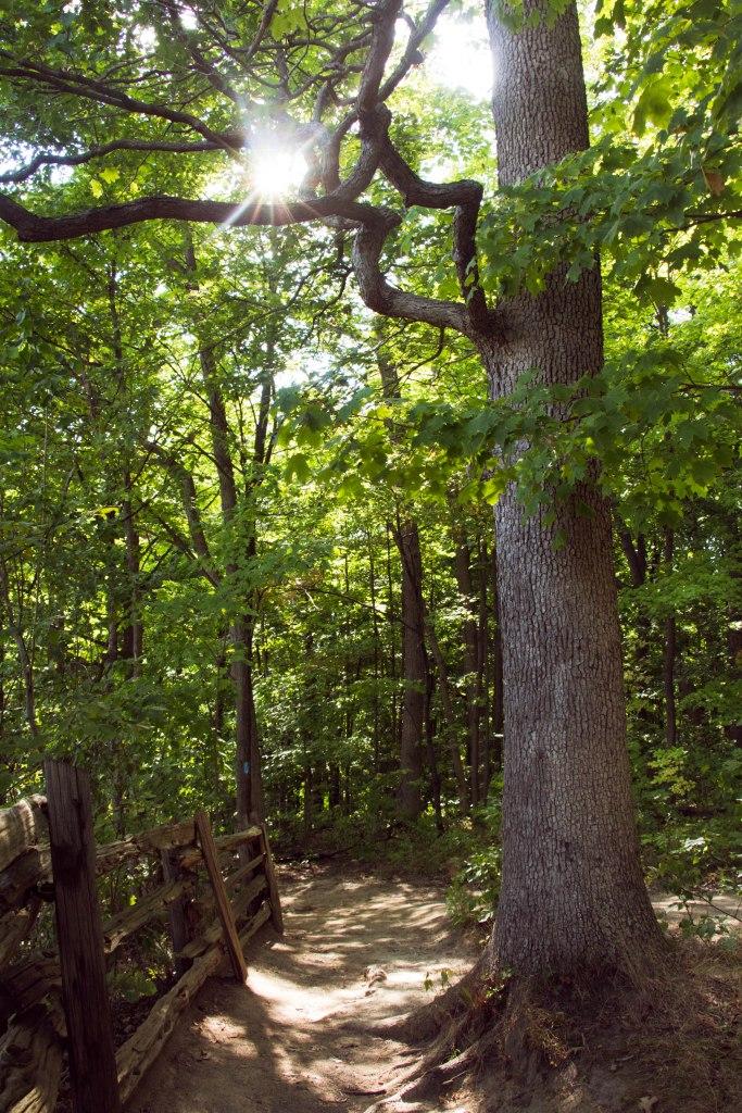 Stefans Tree